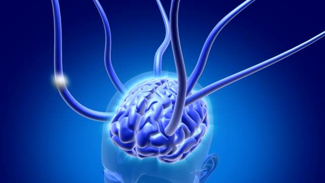 vídeos de stock e filmes b-roll de cérebro de sinais - axónio