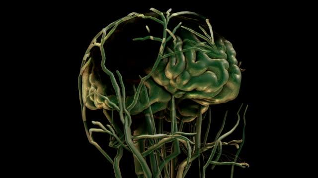 Concetto di cervello la visualizzazione