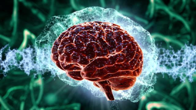 vídeos de stock, filmes e b-roll de ondas cerebrais - lóbulo frontal