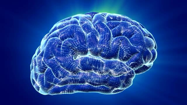 vídeos de stock, filmes e b-roll de cérebro ondas - lobo temporal