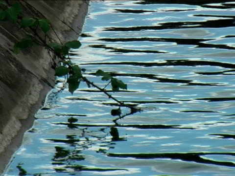 bramble by the water - brambleberry stock videos & royalty-free footage