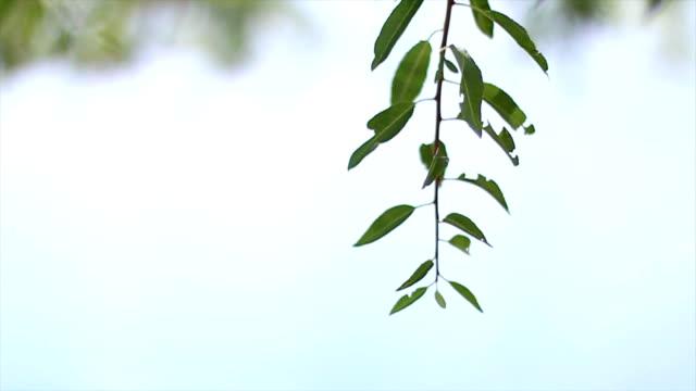 AST eines Baumes