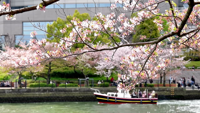 branch of cherry tree in bloom with pleasure boat and cherry-viewing crowd in the background around Osaka Zoheikyoku (Mint Bureau)