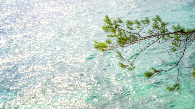 MS DS Zweige Conifer gegen Wellen