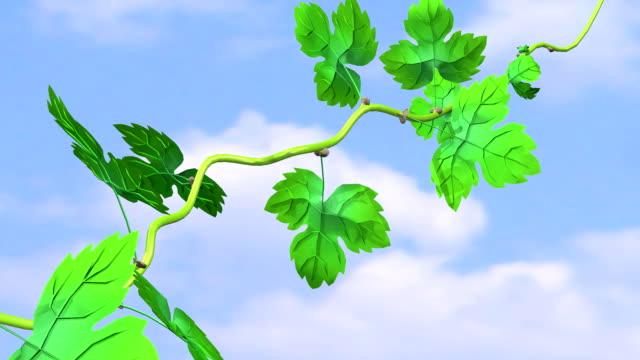 枝のグレープ - 枝点の映像素材/bロール