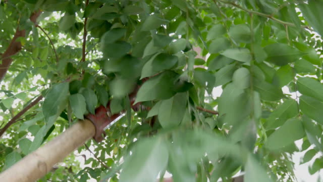 Branch Pruning Tool