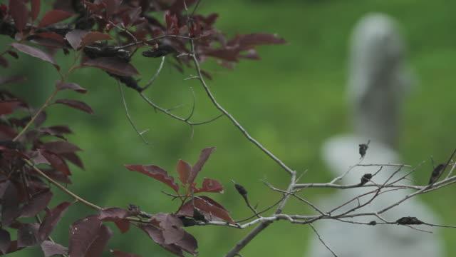 vídeos de stock, filmes e b-roll de branch with a statue of a salmons in the background - representação de animal
