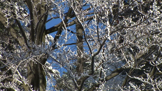 stockvideo's en b-roll-footage met hd: branches covered in snow. - heldere lucht