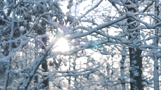 branches covered in snow - winter stock videos & royalty-free footage
