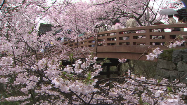 branches laden with spring cherry blossoms frame a footbridge where tourists pass. - nagano prefecture stock videos and b-roll footage