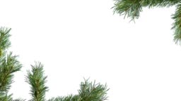 Branches of a coniferous tree on the edges of the screen on a white isolated background