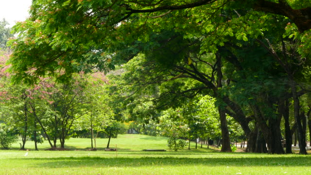 branches of big trees in green park - courtyard stock videos & royalty-free footage