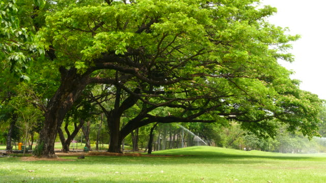 branches of big trees in green park - natural parkland stock videos & royalty-free footage