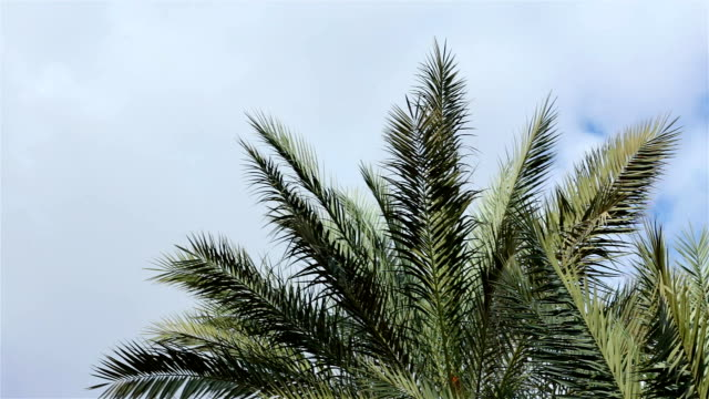 branches of palm trees against the sky. - palm leaf stock videos & royalty-free footage