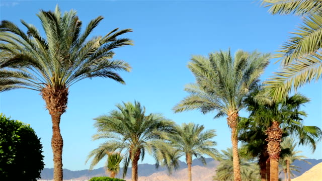 branches of palm trees against the sky. - egypt stock videos & royalty-free footage