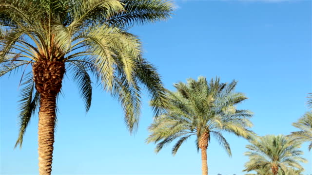 branches of palm trees against the sky. - desert oasis stock videos & royalty-free footage