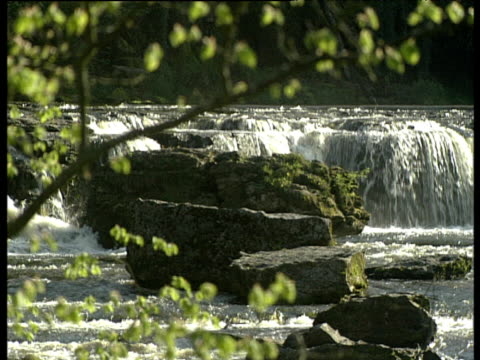branches of tree frame view of waterfall pan right across the width of the river with water gushing over rocks yorkshire - yorkshire england stock videos & royalty-free footage