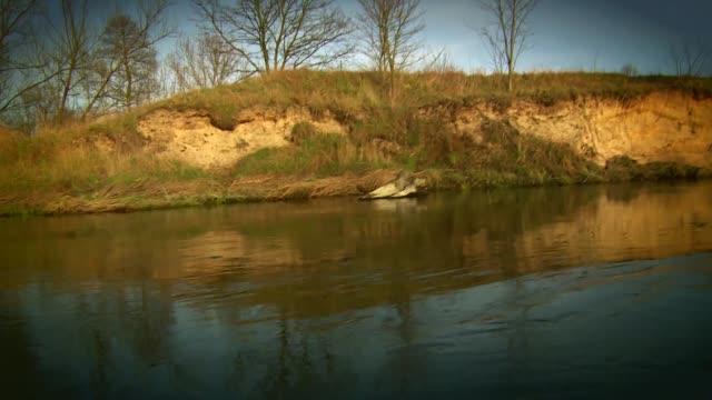 vidéos et rushes de branches on river - brindille
