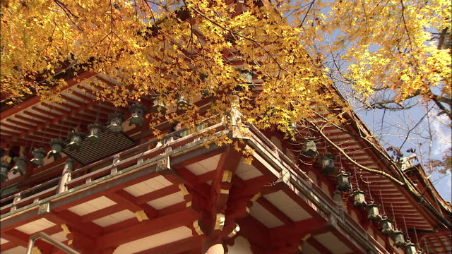 branches with autumn leaves surround the roof of a pagoda. tanzan shrine - nara prefecture stock videos and b-roll footage