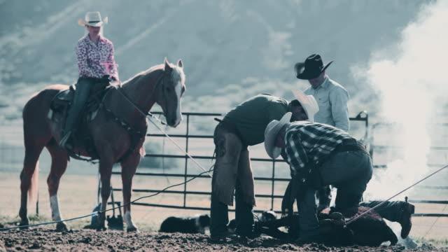 Branding Rinder in Utah