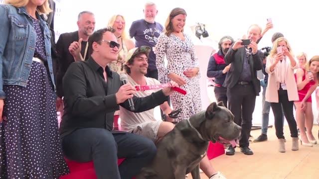 vídeos y material grabado en eventos de stock de brandy la perra de brad pitt en erase una vez en hollywood de quentin tarantino fue recompensada este viernes con la palm dog como mejor interprete... - brad pitt