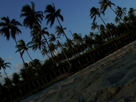 stockvideo's en b-roll-footage met ms, canted, brazil, bahia, imbassai beach, coconut palms by river - waaierpalm
