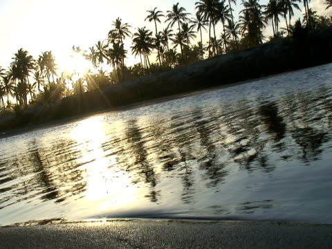 ms, canted, brazil, bahia, imbassai beach, coconut palms by river - placca di montaggio fissa video stock e b–roll