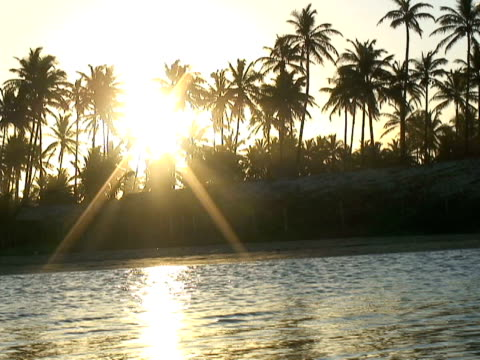 MS, Brazil, Bahia, Imbassai Beach, Coconut palms by river