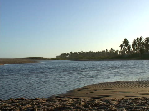 stockvideo's en b-roll-footage met ws, brazil, bahia, imbassai beach, river flowing into sea - waaierpalm
