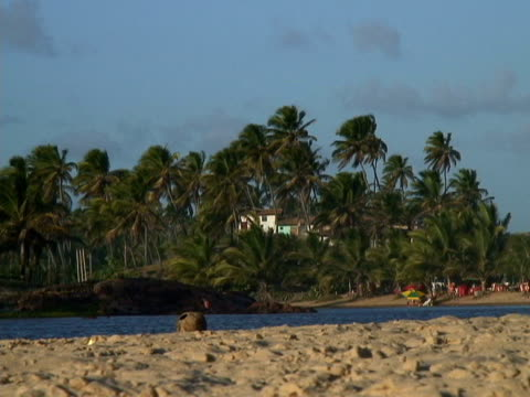 stockvideo's en b-roll-footage met ms, brazil, bahia, imbassai beach - waaierpalm
