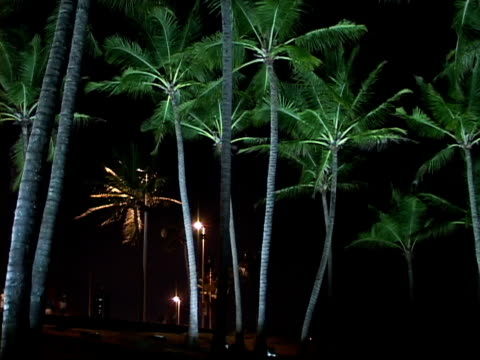 stockvideo's en b-roll-footage met ms, la, brazil, bahia, salvador, coconut palms at night - waaierpalm