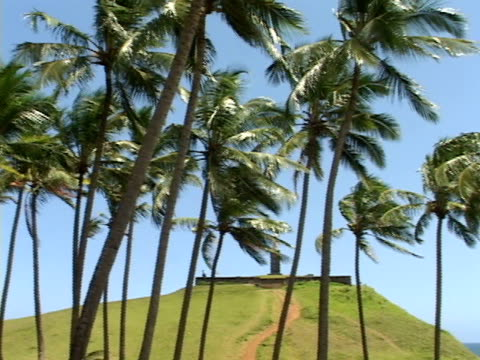 stockvideo's en b-roll-footage met ms, pan, brazil, bahia, salvador, coconut palms at windy and sunny day - waaierpalm