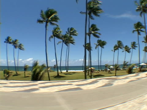 stockvideo's en b-roll-footage met side pov, brazil, bahia, salvador, passing coconut palms along seashore at sunny day - waaierpalm