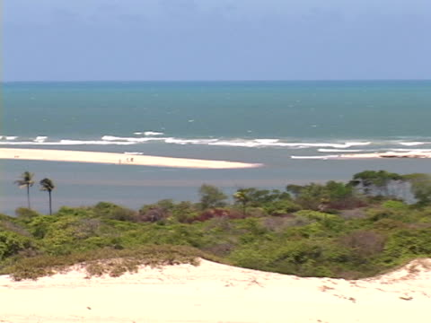 stockvideo's en b-roll-footage met zo, ws, brazil, ceara, fortaleza,  beach on sunny and windy day - waaierpalm