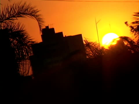 t/l, ms, brazil, goias, goiania, silhouettes of building and palm leaves against orange sky at sunset - fächerpalme stock-videos und b-roll-filmmaterial