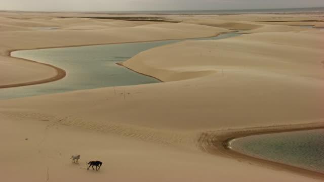 Brazil, Lençois Maranhenses: Dunes with horses