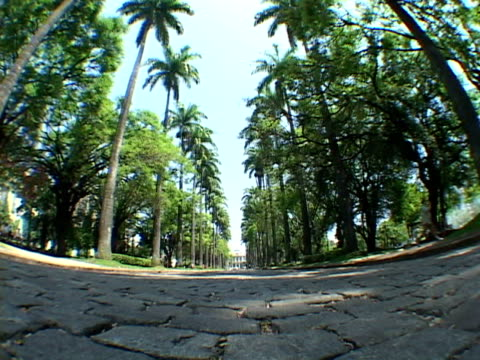 la, fish eye, brazil, minas gerais, belo horizonte, tree lined alley in park - fächerpalme stock-videos und b-roll-filmmaterial