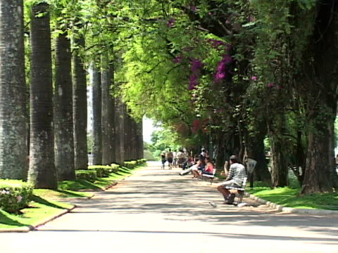 ZO, MS, Brazil, Minas Gerais, Belo Horizonte, Tree lined alley in park
