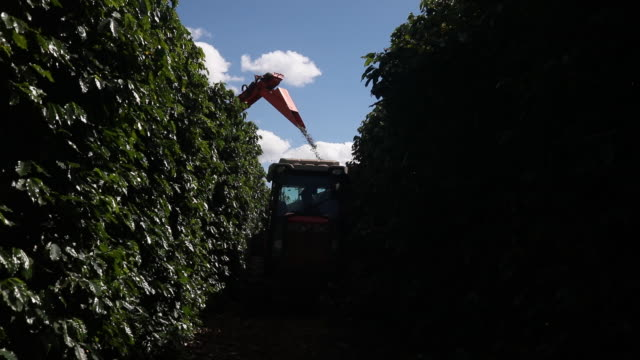 brazilian coffee production in minas gerais brazil on friday may 31 2019 - minas stock videos and b-roll footage