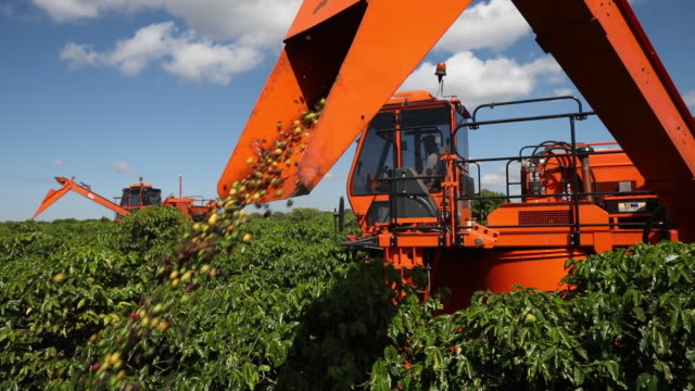 brazilian coffee production in minas gerais brazil on friday may 31 2019 - spraying stock videos & royalty-free footage