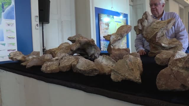 Brazilian paleontologists have identified bone fossils of one of the largest dinosaur ever discovered in Brazil