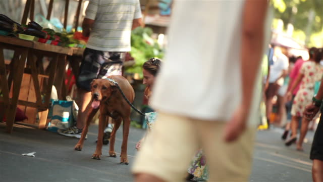 Brazilian woman kneels to comfort dog in busy Rio market