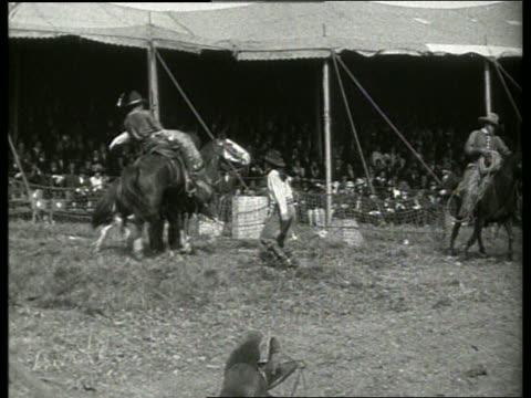 breaking wild horses-buffalo bill's wild west show / 1910's / no sound - pflanzenfressend stock-videos und b-roll-filmmaterial