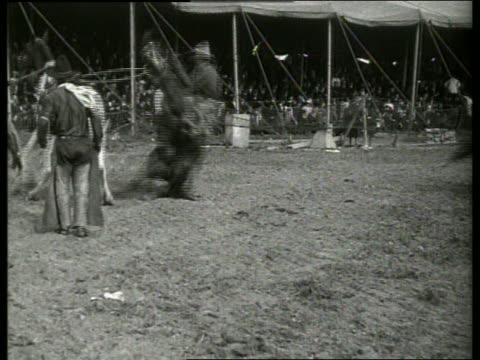 b/w breaking wild horsesbuffalo bill's wild west show / 1910's / no sound - 草食性点の映像素材/bロール