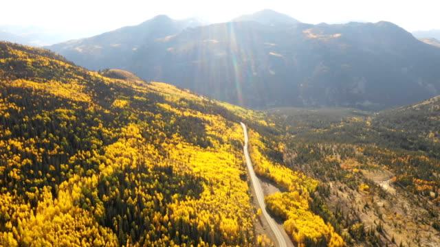 vídeos de stock, filmes e b-roll de vistas deslumbrantes do drone da floresta de aspen - árvore de folha caduca