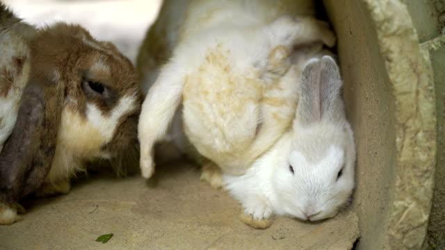 vidéos et rushes de lapin d'élevage. slo mo. - accouplement animal