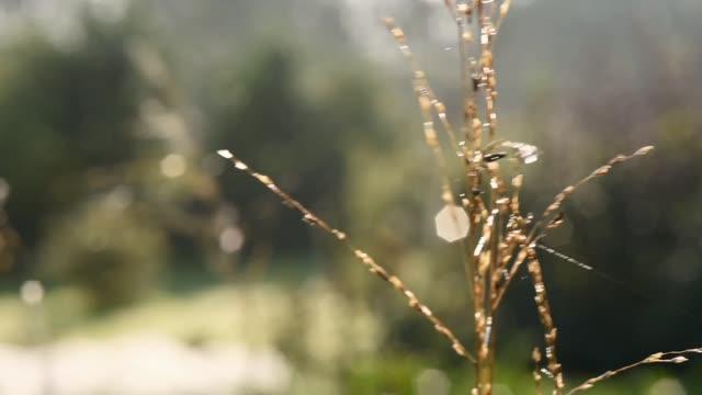 Breeze blowing Grass seed head