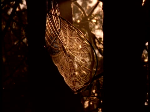 mcu breeze blowing through sunlit cobweb, usa - animal colour stock videos & royalty-free footage