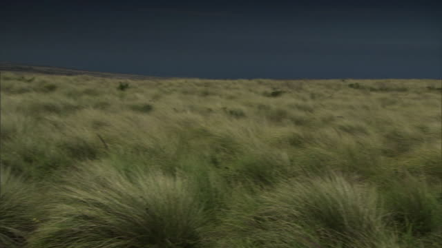 a breeze blows through scrublands at the big island's place of refuge in hawaii. - shrubland stock videos & royalty-free footage