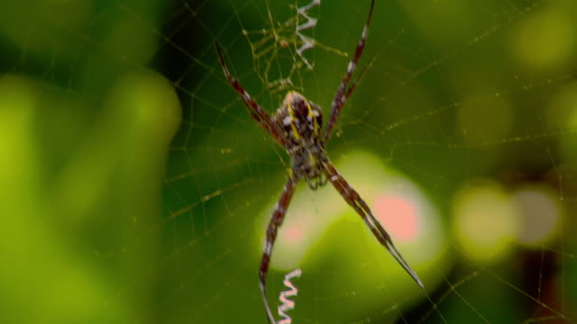 a breeze rustles a spider on its web. - kauai stock videos & royalty-free footage